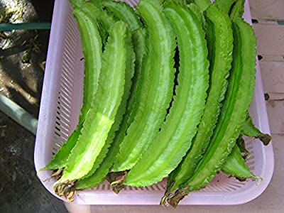 Wing Bean (25 Seeds) Quality Seeds - 1 Package