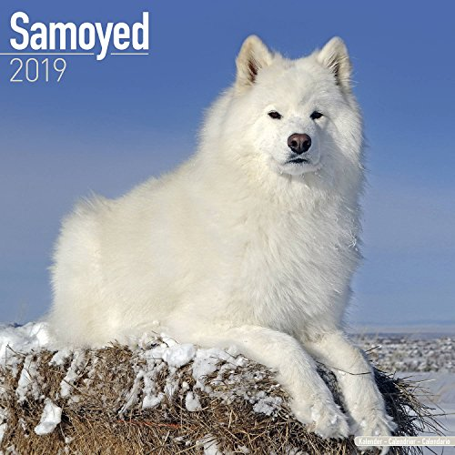 Samoyed Calendar 2019 - Dog Breed Calendar - Wall Calendar 2018-2019