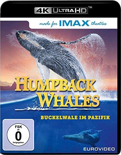 Humpback Whales UHD