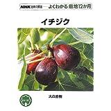 イチジク (NHK趣味の園芸 よくわかる栽培12か月)