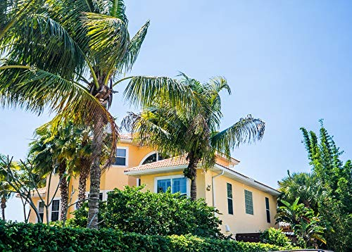 Canvas Print Florida Casey Key Palm Trees Nokomis House Pops Vivid Imagery Stretched Canvas 32 x 24