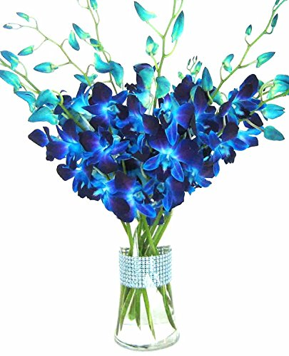 Premium Cut Blue Orchids  10 Stems Orchid With Rhinestone Mesh Ribbon Vase