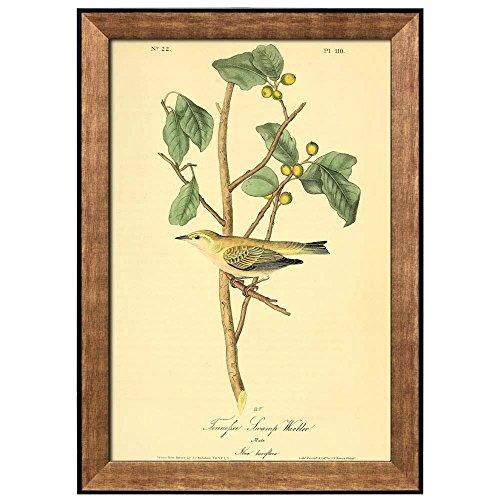 Beautiful Illustration Inside of an Elegant Frame of a Tennefsee Swamp Warbler by John James Audubon Framed Art