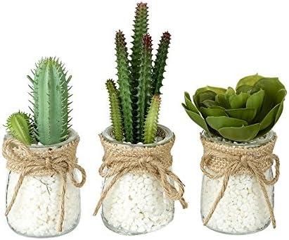Juego de 3 macetas de cristal transparente con cactuses/suculentas artificiales en miniatura y piedras blancas: Amazon.es: Hogar