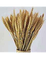 Natural Dried Wheat Stalks, 100 Stems Wheat Sheaves for Flower Arrangements Home Wedding Decor
