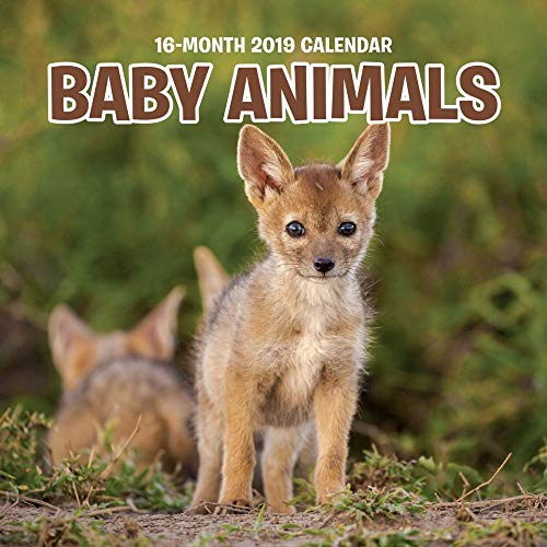 2019 Baby Animals 2019 Mini Wall Calendar, Baby Animals by Wells Street by LANG