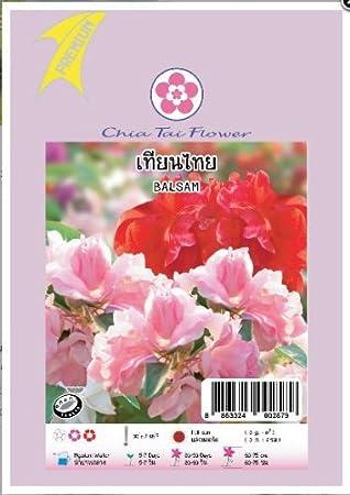Amazon.com: Bálsamo flor semillas – Fácil crecer Balsam Flor ...
