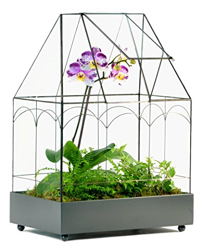 H Potter Wardian Case Planter Glass & Metal Terrarium Container for Succulents, Plants, Flowers, Orchids, Foliage & More ()
