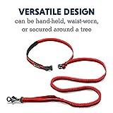 RUFFWEAR, Roamer Dog Leash, Adjustable Stretch Lead for Running, Red Currant, Large