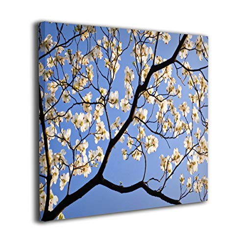 (Yanghl Canvas Wall Art Prints A Flowering Dogwood Tree Blooms On A Spring Day Modern Decorative Artwork for Wall Decor and Home Decor Framed Ready to Hang 12