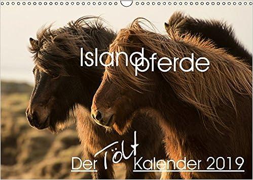 Islandpferde - Der Tölt Kalender Wandkalender 2019 DIN A3 ...