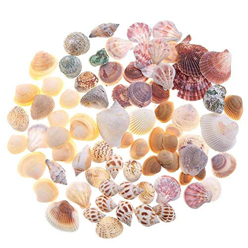 200 Pieces Sea Shells Mixed Ocean Beach Seashells, Natural Colorful Sea Shells Starfish for Fish Tank, Candle Making, Vase Fillers, Beach Theme Party