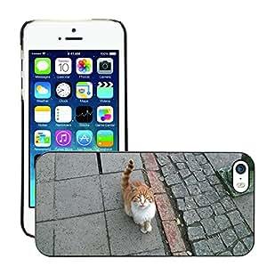 Super Stellar Slim PC Hard Case Cover Skin Armor Shell Protection // M00127175 Cat Orange Cat Felis Domesticus // Apple iPhone 5 5S 5G