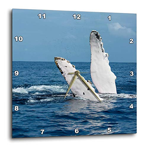 3dRose Danita Delimont - Whales - A Humpback Whale Floats on its Back, Silver Bank, Dominican Republic - 15x15 Wall Clock (DPP_312990_3)