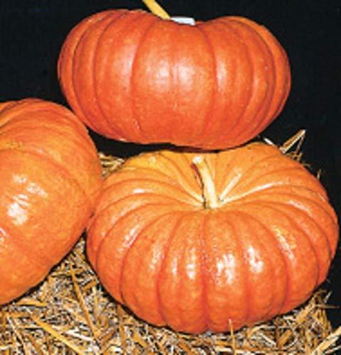 (Heirloom Cinderella Pumpkin Rouge VIF d'Etampes 15 Seeds Delicious Pretty Decor)