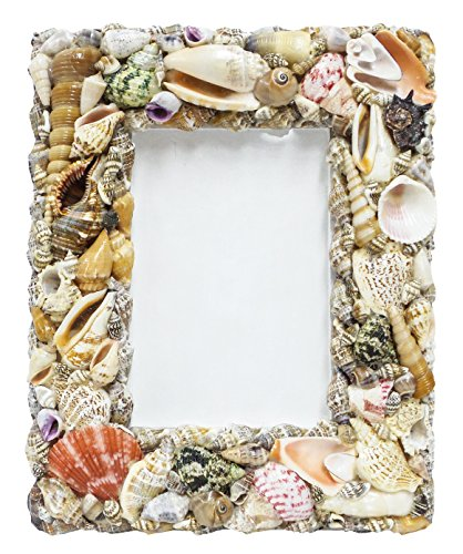 U.S. Shell Picture Frame Frame-8x10 inches, 8 x 10 ()