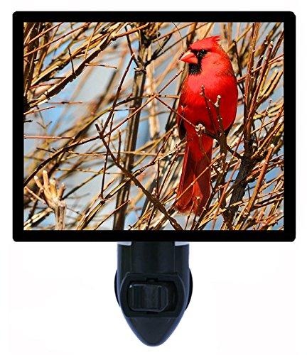 - Night Light - Late Season Cardinal - Red Bird