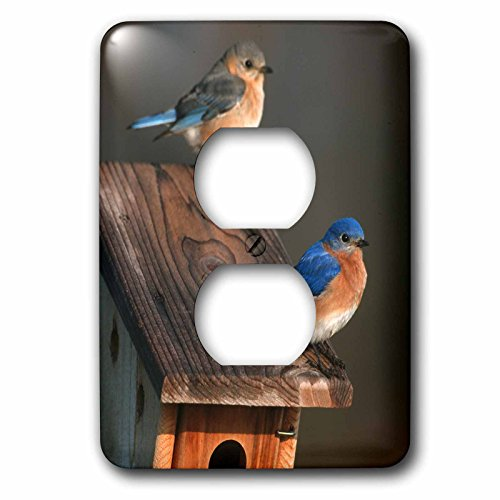 3dRose Danita Delimont - Bluebird - Eastern Bluebird male and female on Peterson nest box, Illinois - Light Switch Covers - 2 plug outlet cover - Illinois Outlets