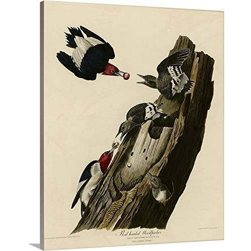 GREATBIGCANVAS Gallery-Wrapped Canvas Entitled Red Headed Woodpecker by John James Audubon 24