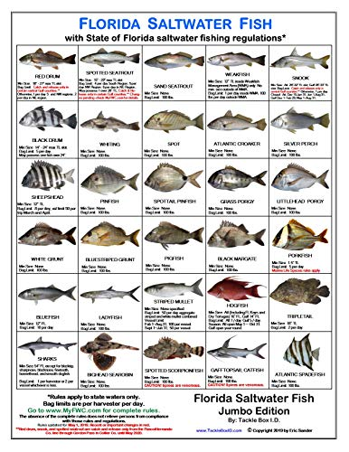 Tackle Box I.D. Florida Saltwater Fish Identification Card - Jumbo Edition - 60 Common Fish - May 2019 Rules (Best Surf Fishing Beaches In Florida)