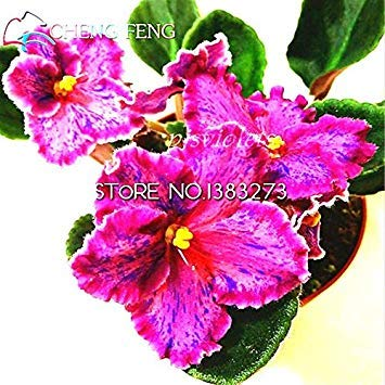Amazon.com : ASTONISH Seeds: Multi-Colored: 50pcs Beautiful ... on orchids red, mums red, cactus red, peppers red, design red, animals red, ornamental grasses red, pots red, berries red, nature red, flowers red,