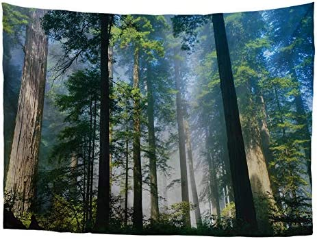 Bigcardesigns Nature Forest Tapestry Wall Hanging Trees Psychedelic Art Decor for Home Bedroom Dorm X-Large Size 90 x 108
