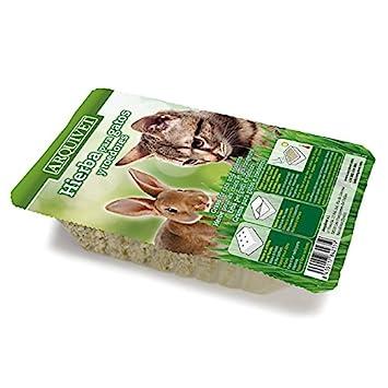 Arquivet 8435117842359 - Hierba Gatos en Bandeja: Amazon.es: Productos para mascotas