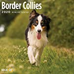 2020 Border Collies Wall Calendar by Bright Day, 16 Month 12 x 12 Inch, Cute Dogs Puppy Animals Colley 6