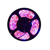 Tesfish LED Plant Grow Strip Light Red Blue 3:1 16.4ft IP65 Waterproof Full Spectrum SMD 5050 300 LEDs Rope Light DC 12V for Aquarium Greenhouse Hydroponic Plant