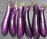buy David's Garden Seeds Eggplant Purple Shine 9162 (Purple) 50 Non-GMO, Hybrid Seeds now, new 2020-2019 bestseller, review and Photo, best price $7.95