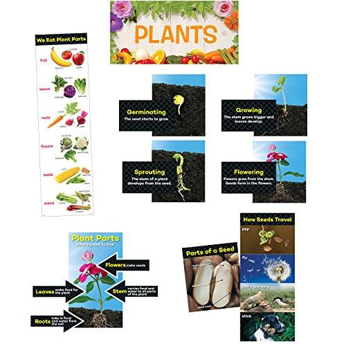 Creative Teaching Press Plants Mini Bulletin Board, Grade K to 2 (6988)
