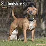 Staffordshire Bull Terrier Calendar - Dog Breed Calendars - 2016 - 2017 Wall calendars - 16 Month by Avonside