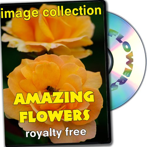 Royalty Free Photographs Flowers - Amazing Flowers, Royalty Free Image Collection, Full Commercial Licence