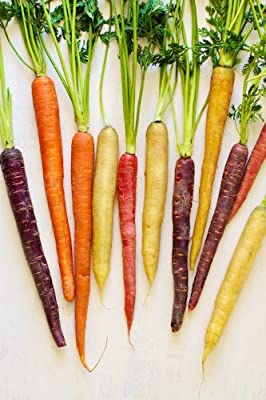 Todd's Seeds Carnival Blend (Rainbow Blend) Carrot Seeds - Non-Gmo and Heirloom Seeds- 1000 Seed Packet