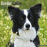 Border Collie Calendar - Dog Breed Calendars - 2017 - 2018 wall Calendars - 16 Month by Avonside