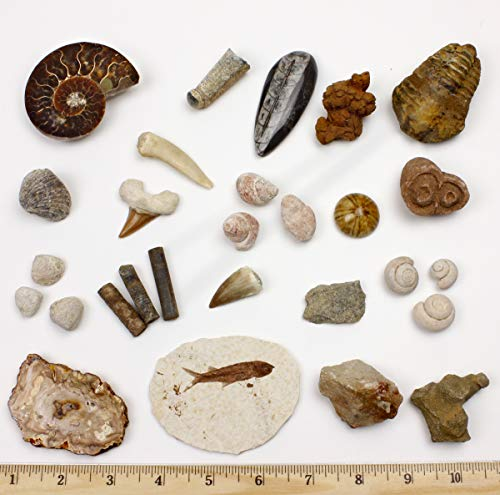 Dancing Bear Fossil Collection Set, 20 Real Specimens: Trilobite, Ammonite, Fish Fossil, Shark Tooth, Petrified Wood, Dinosaur Bone, Fossil Book, Time Scale, ID Cards, Magnifying Glass, Science Kit ()