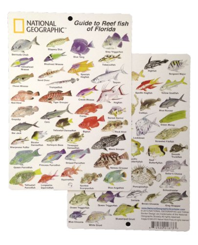 - National Geographic - Guide to Reef fish of Florida - Fish ID Card (6 in by 9 in)