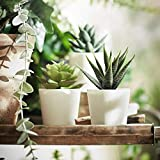 IKEA Fejka Artificial Potted Plant with Pot Indoor