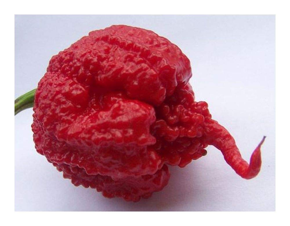 Chili Carolina Reaper - Hottest pepper of the world - 10 seeds Exotic Plants