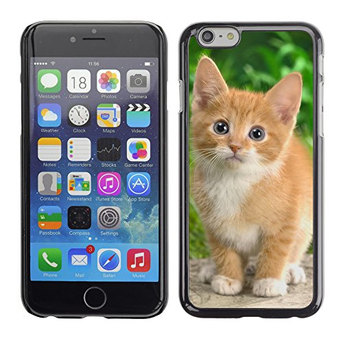 "Premio Sottile Slim Cassa Custodia Case Cover Shell // V00003185 curieux chaton tigré // Apple iPhone 6 6S 6G 4.7"""