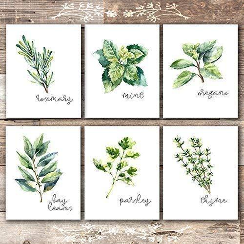 Kitchen Herbs Art Prints - Botanical Prints - (Set of 6) - Unframed - 8x10s from Dream Big Printables