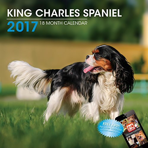 LittleGifts King Charles 2017 Calendar (3059)