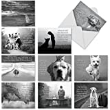 M1623BNsl Canine Comments: 10 Assorted Blank All-Occasion Note Cards Have Endearing Photos of Dogs Paired With Inspirational Sayings, w/White Envelopes.