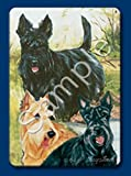 Best Ruth Maysteads - Scottish Terrier (Scottie) Dog Playing Cards Designed Review