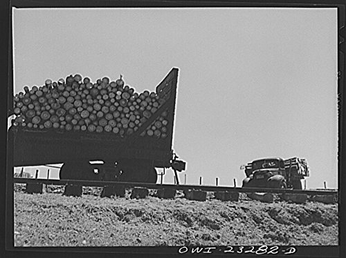 (1943 Photo Nacogdoches County, Texas. Truck load of pulpwood being transferred to railroad flat cars for shipment to the Southland paper mill Location: Nacogdoches County, Texas)