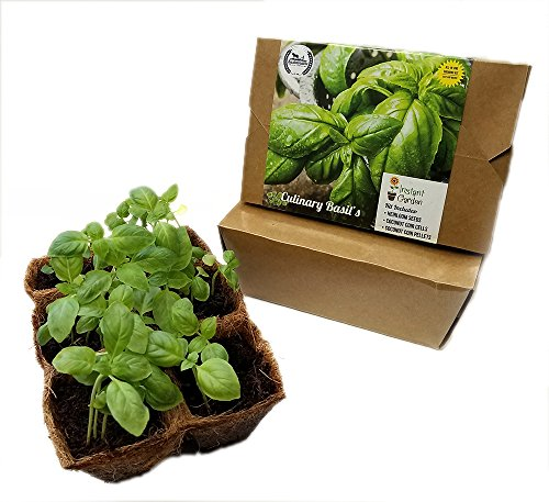 Culinary Basil Seed Starter Kit, Non GMO, Heirloom Basil Seeds with 6 Pack Coconut Fiber Grow Kit (Heirloom Basil Seeds)