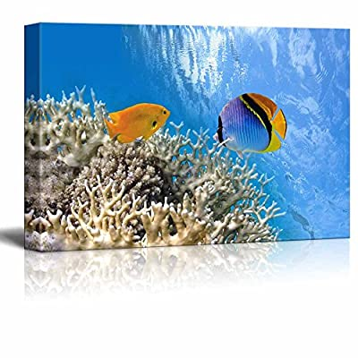 Tropical Fish on Coral Reef in The Red...16
