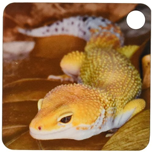 3d Rose 3dRose Leopard Gecko morph, Lizard, Pakistan-AS28...