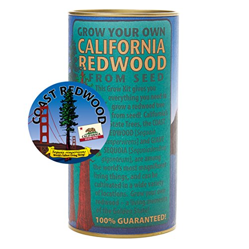 - California Redwood (Sequoia sempervirens) | Tree Seed Grow Kit | The Jonsteen Company