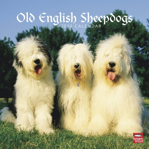 Old English Sheepdogs 2010 Square Wall (Multilingual (Sheepdog 2010 Calendar)